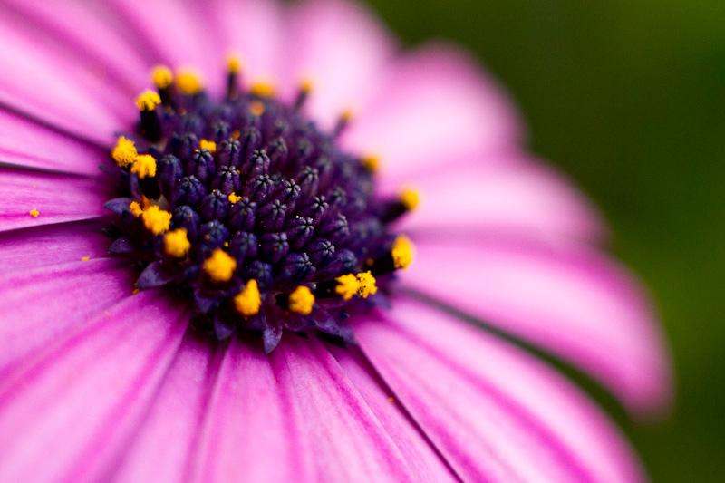 reto-11-plantas-y-flores-Alberto-Gallardo-Sousa