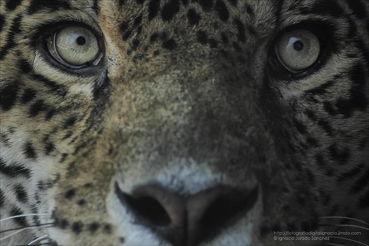 reto-57-animales-Ignacio-Jurado-Sánchez