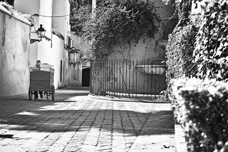 reto-29-y-sevilla-Manuel-Fernández-Arcos