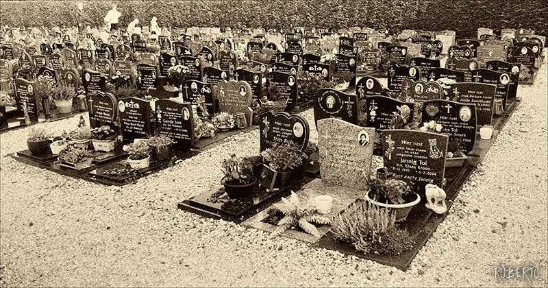 reto-54-en-el-cementerio-Roberto-Rogelio-Andrade-Sánchez