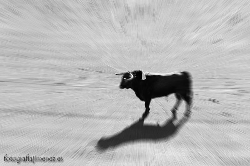 reto-57-animales-Juan-Jiménez-Quintana
